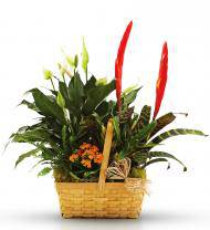 Blooming and Green Plants in a Basket