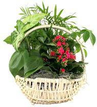 Classic Dish Garden Basket - Farm Fresh