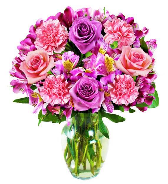 Pastel Carnation Dreams
