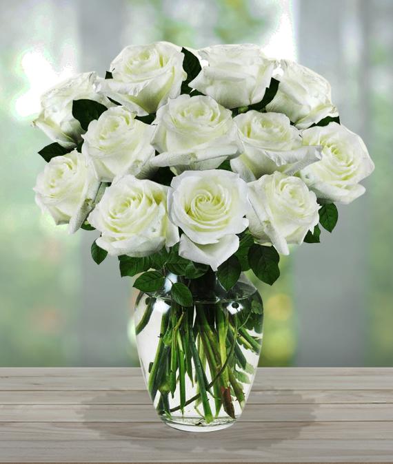 White Sympathy Roses